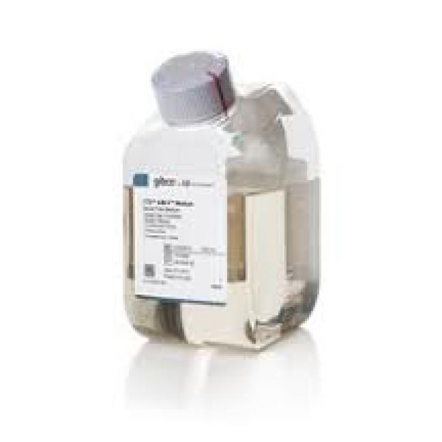 Môi Trường Nuôi Cấy Tế Bào Miễn Dịch CTS™ AIM-V™ Medium, without phenol red, without antibiotics